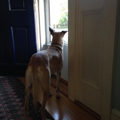 telly dog
