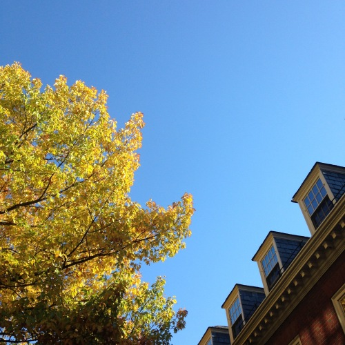yellow leaves dormer windows harvard yard