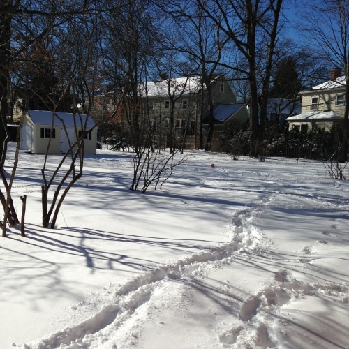 brookline backyard snow blue sky