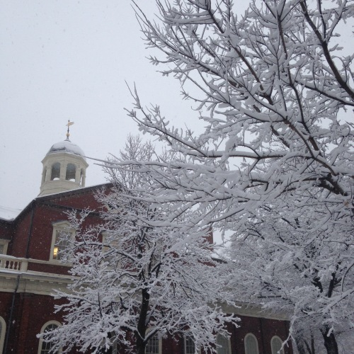 harvard hall snow trees winter