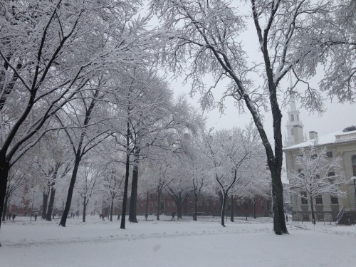 harvard yard trees snow