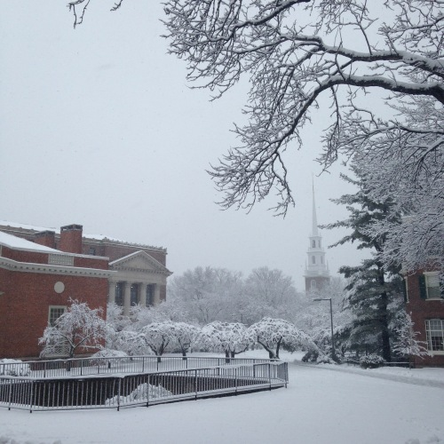 houghton library harvard memorial church snow