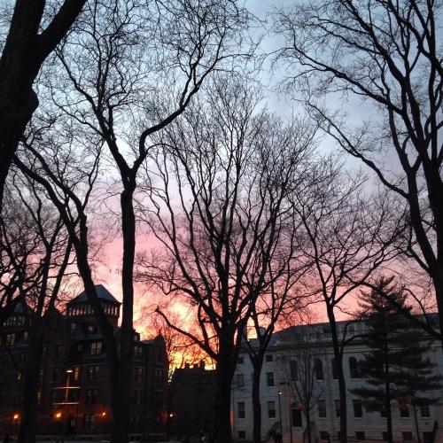pink sunset harvard yard cambridge ma