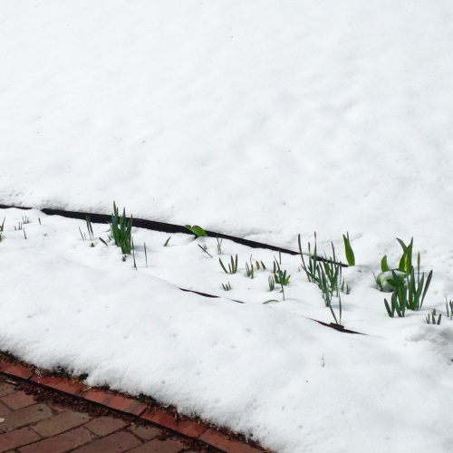 green leaves snow spring winter