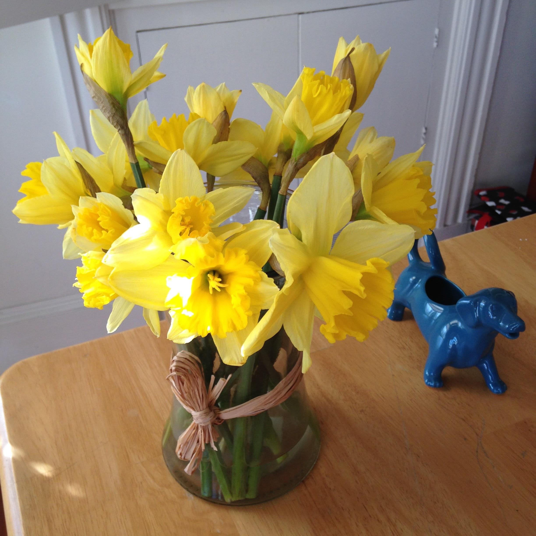 daffodils dachshund table
