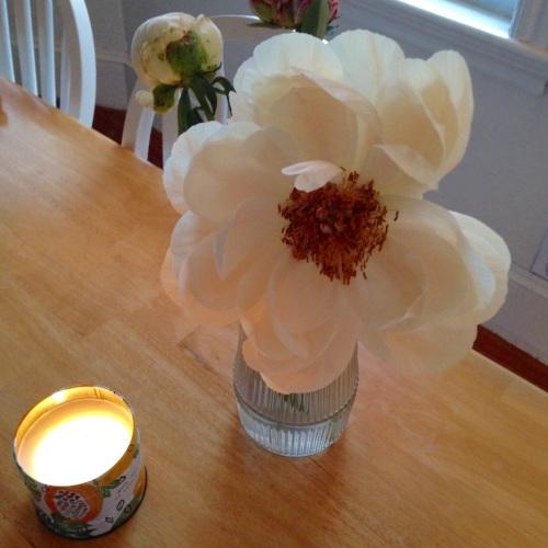 peony candle