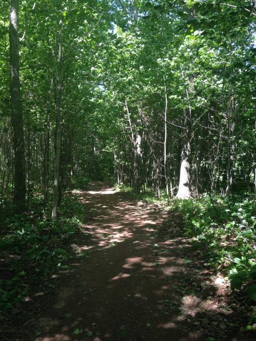 birch path woods silver bush pei