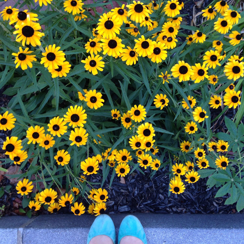 black eyed susans flowers shoes