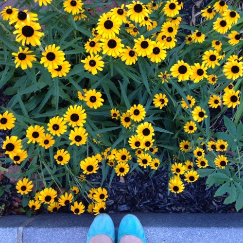 black eyed susans flowers shoes