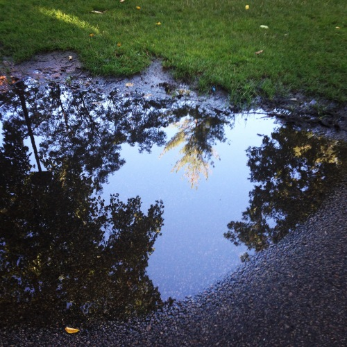leaf reflections harvard yard