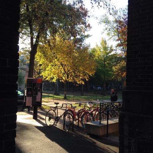 golden leaves bikes harvard yard