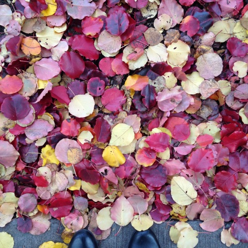 red gold leaves ground