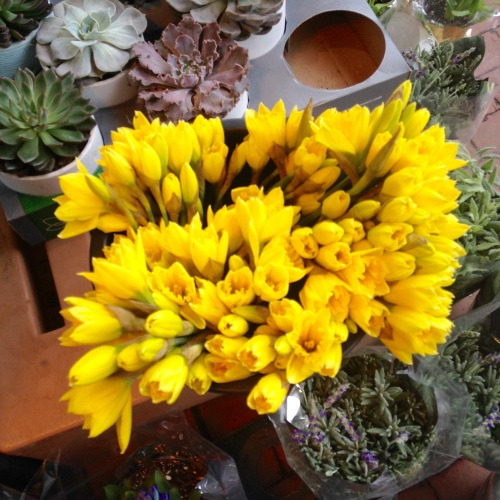 daffodils succulents florist