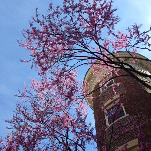 redbud blue sky brick building
