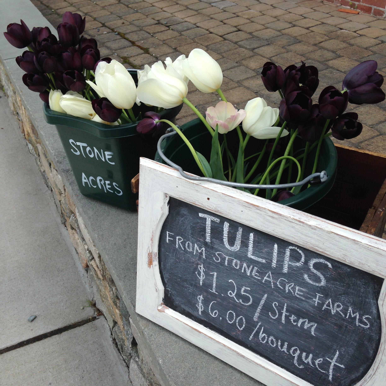 tulips mystic ct
