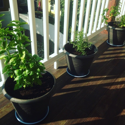 herb garden back porch plants
