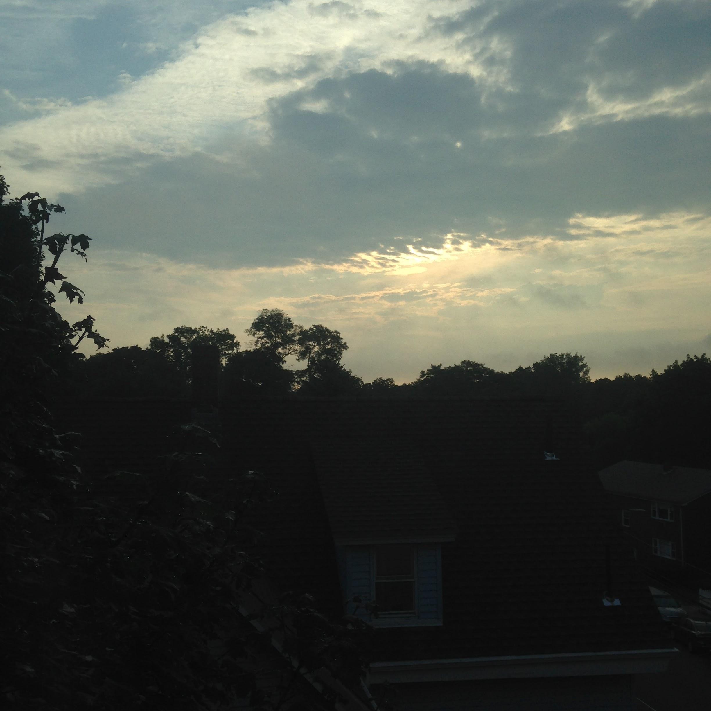 morning light treetops