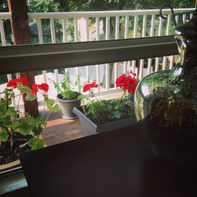 window lamp geraniums herbs porch
