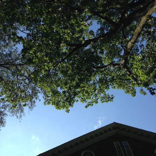 komorebi harvard yard tree sky