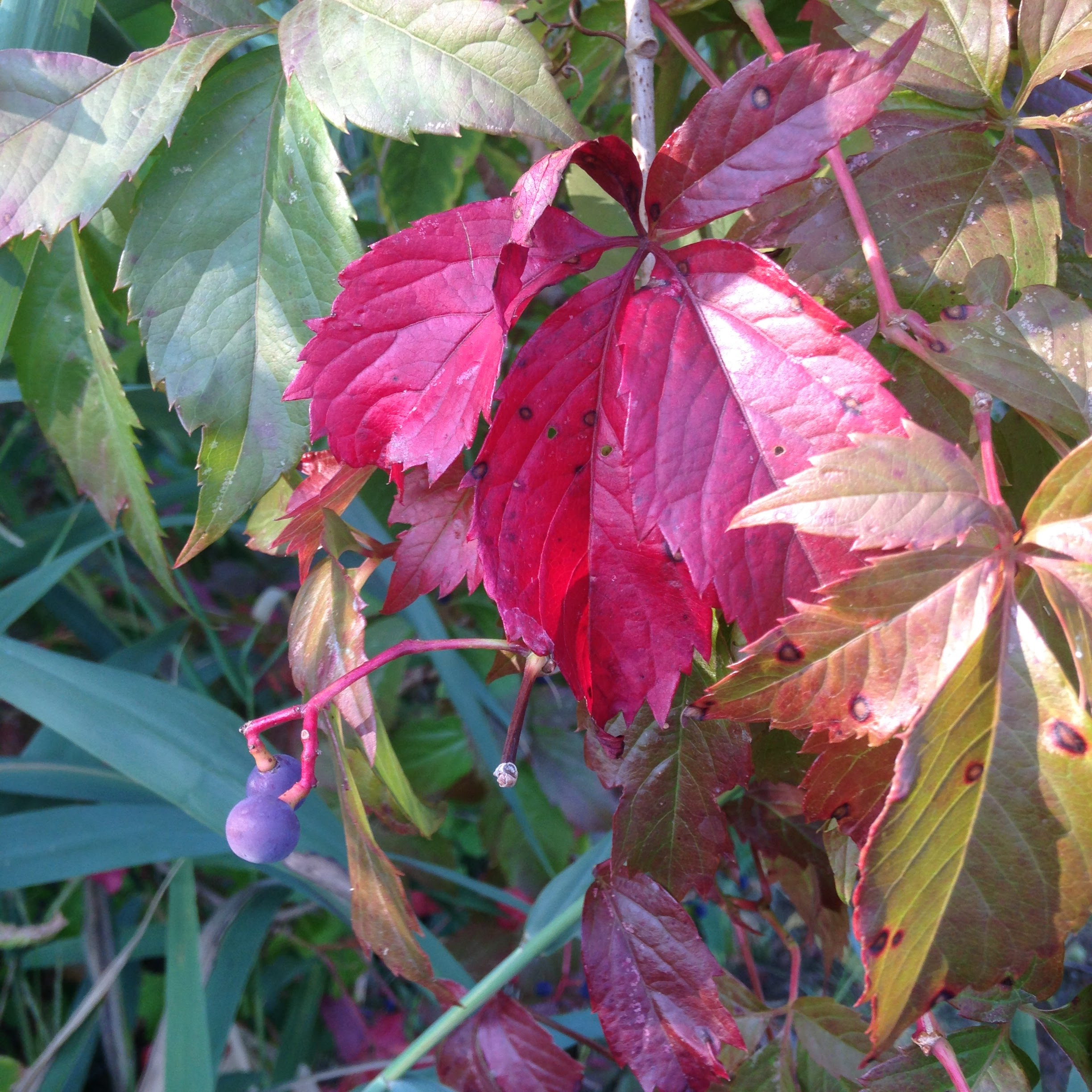 red leaves neponset trail