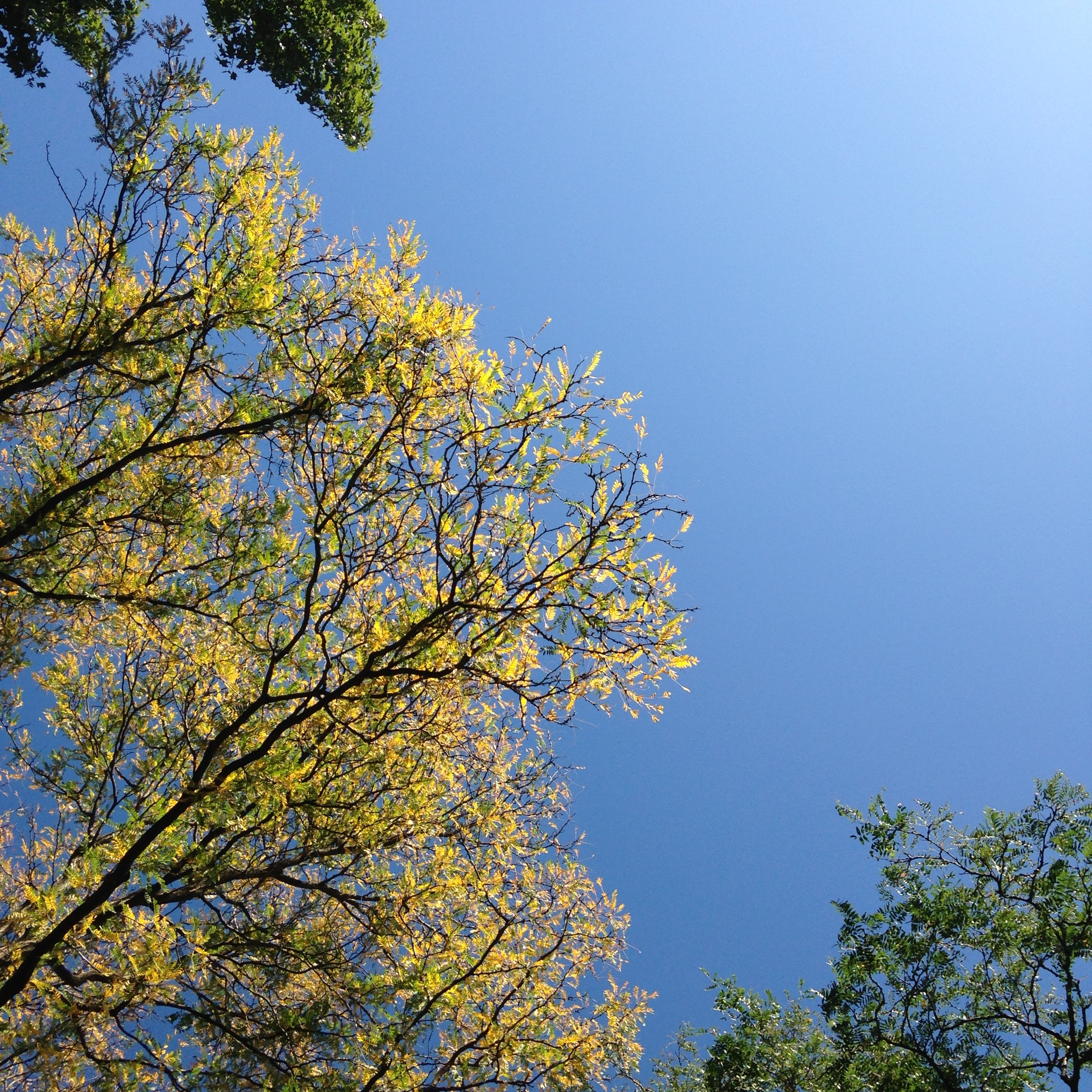 leaves yellow green blue sky