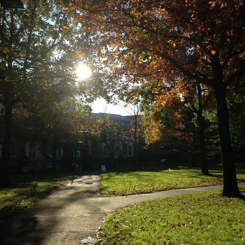 sever quad morning harvard yard sunshine trees