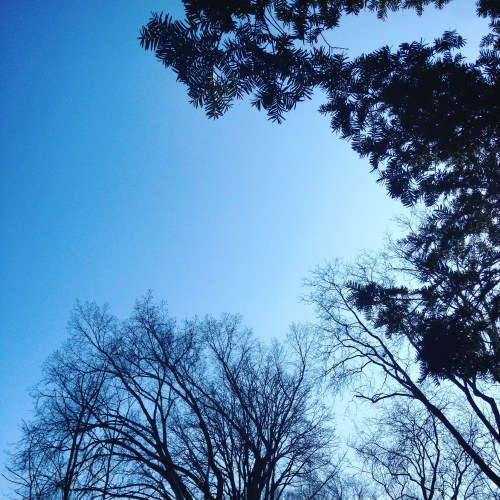 blue sky branches