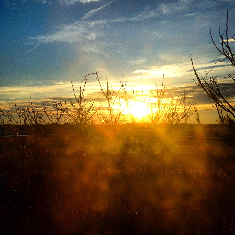 marsh reeds sunrise blue sky