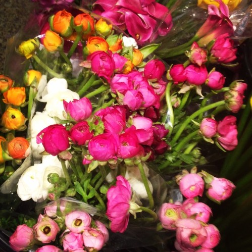 ranunculus pink orange flowers