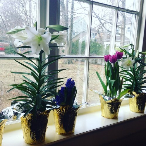 flowers lilies windowsill church tulips brookline easter
