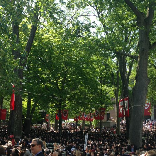 harvard yard banners trees commencement
