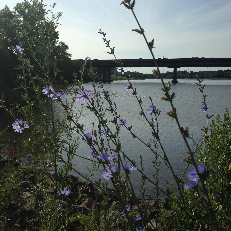 blue flowers sea sky neponset