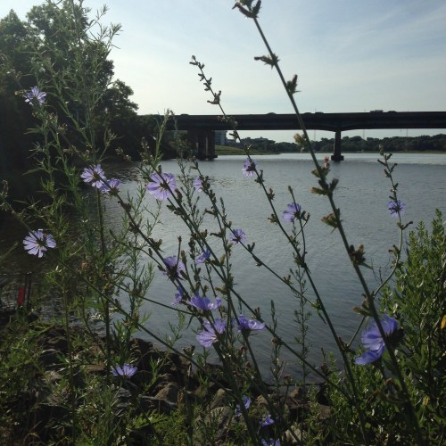 blue flowers sea sky neponset