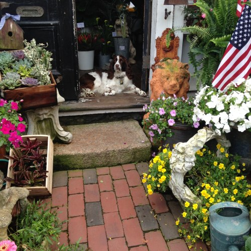 garden shop flowers dog spaniel bella