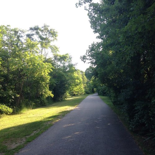 trail morning summer green trees neponset