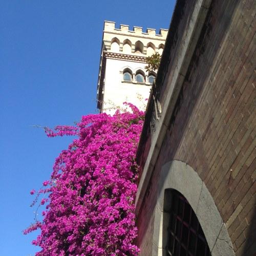 bougainvillea flowers sevilla