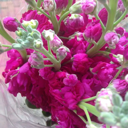 pink stock flowers bouquet