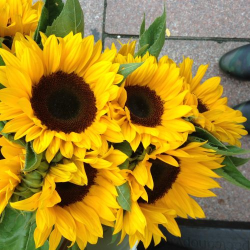 sunflowers-market-boots