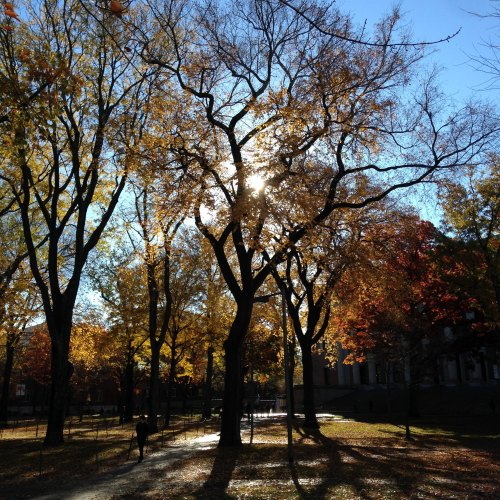 Harvard yard November light trees fall blue sky