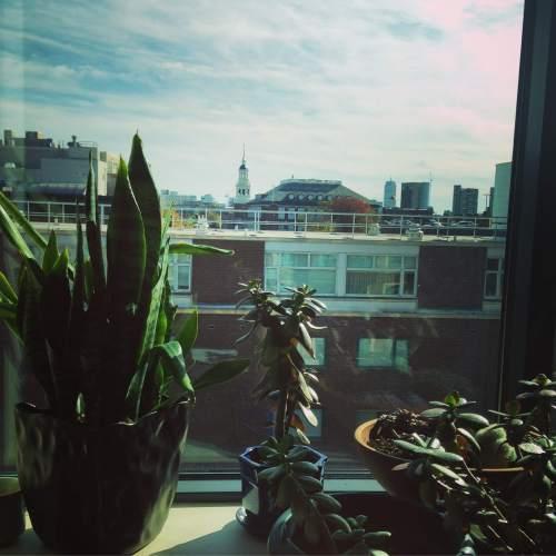 Lowell house window view plants Harvard