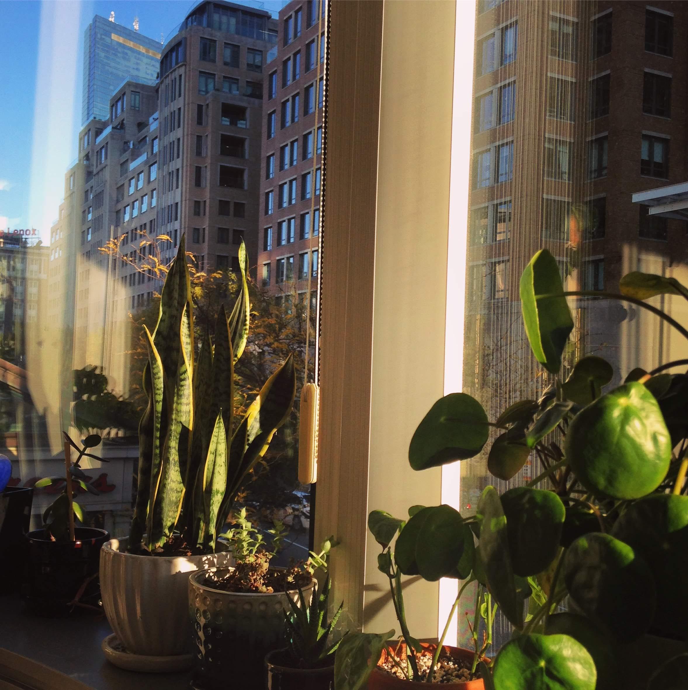 plants sunny window blue sky