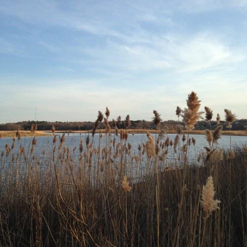 reeds river blue sky