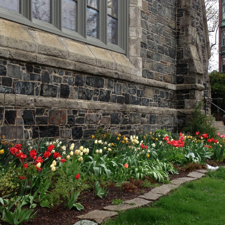 tulips flowers stone church Cambridge