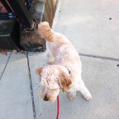 phoenix dog sidewalk