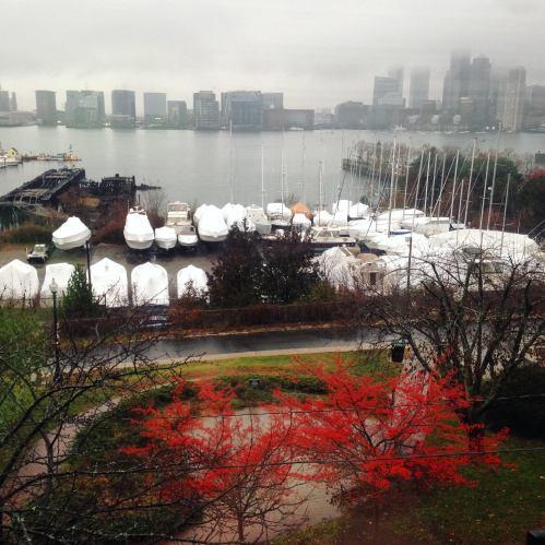 harbor-view-red-berries