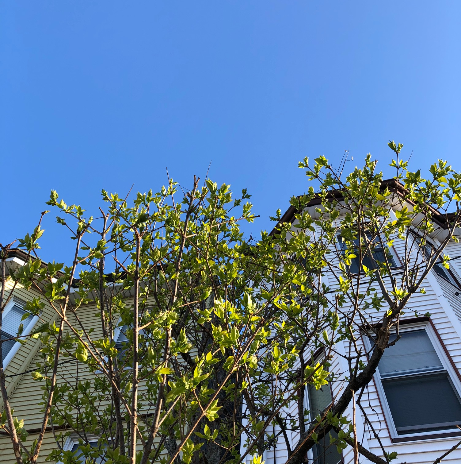 leaves-blue-sky-eastie