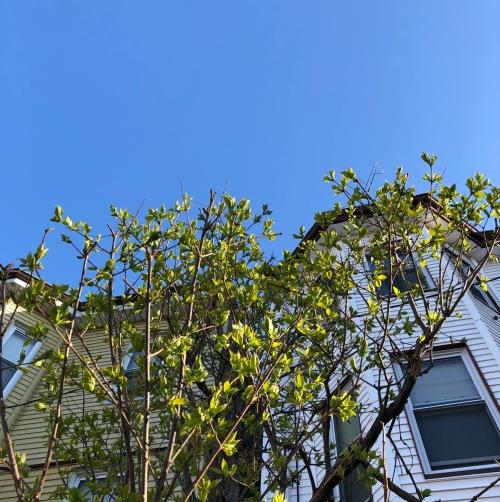 leaves-blue-sky-eastie
