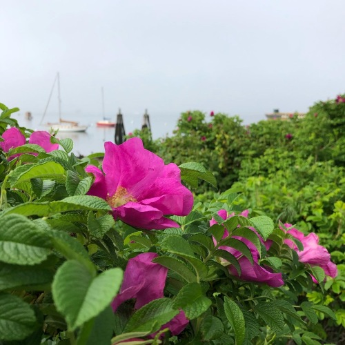 beach-roses-boats-eastie